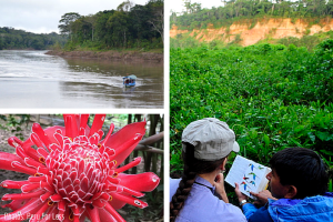 Amazon Rainforest Tour _ PeruForLess Collage