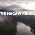 2018 május - Gödöllő a nemzetközi színtéren nyert harmadik helyezést a Macaw Kingdom